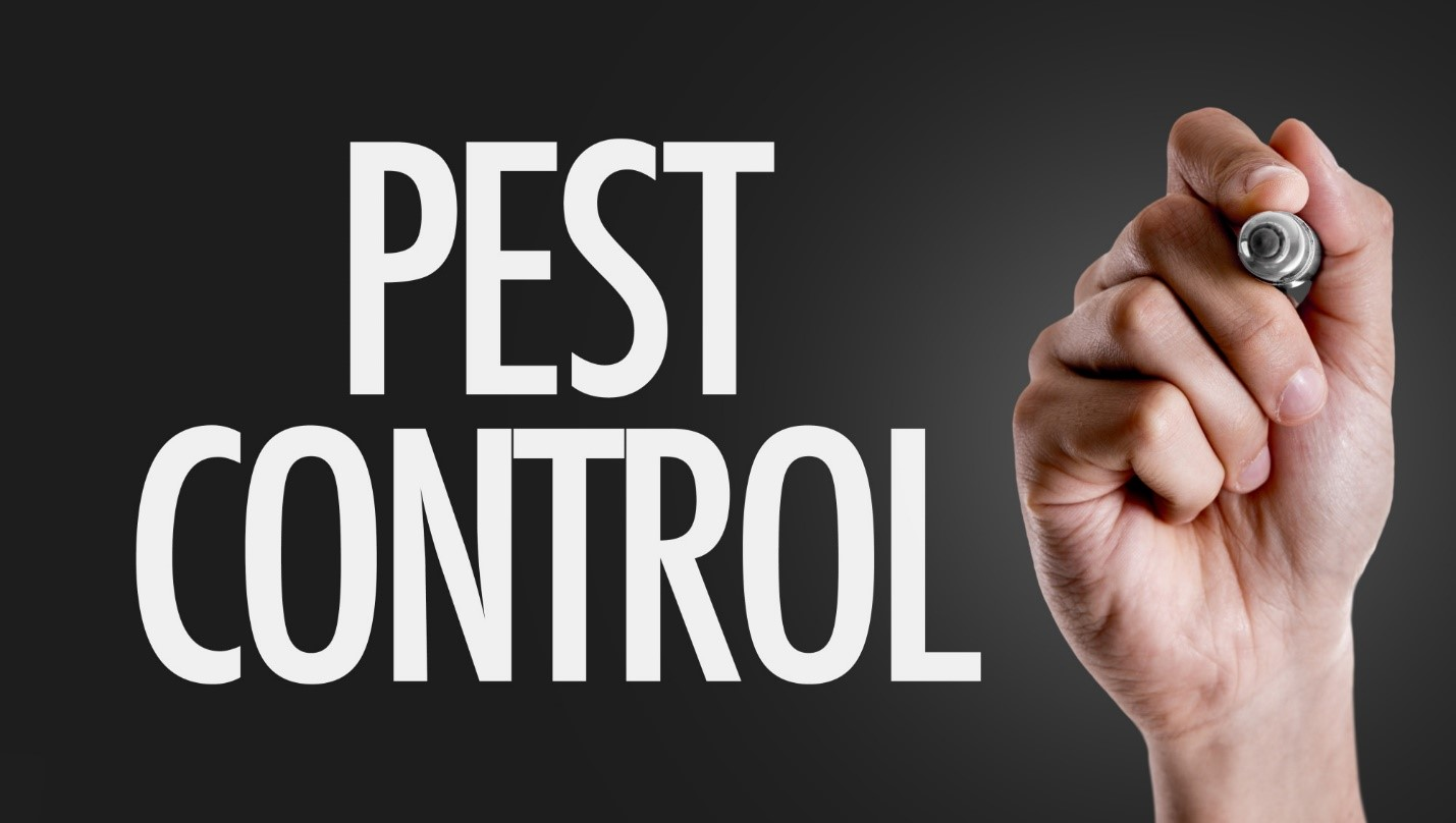 How Do I Choose the Best Pest Control Company in My Local Area?